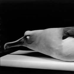 Albatross (Bird Skins Room #6), Taranaki St, Wellington, 3 October 1995